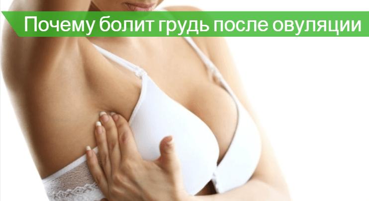 грудь болит после овуляции