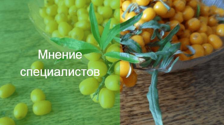 тампоны с медом и облепиховым маслом